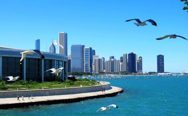Chicago Birds
